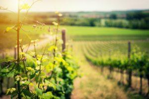 Provence_wine